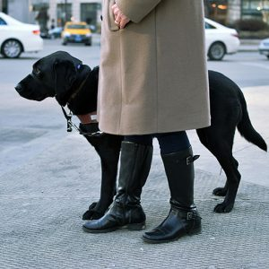 Guide Dog and Handler at a street corner