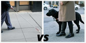 Cane User on left and guide dog handler on right