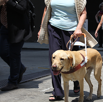 Kathy walking down Chicago street with her guide dog, Rowen.