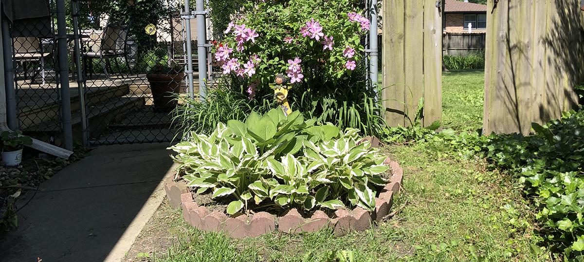 Kathy's coronavirus garden